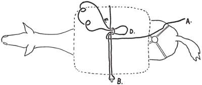 How to tie diamond hitch on mule step2