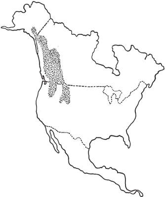 North American Rocky Mountain Goat Range