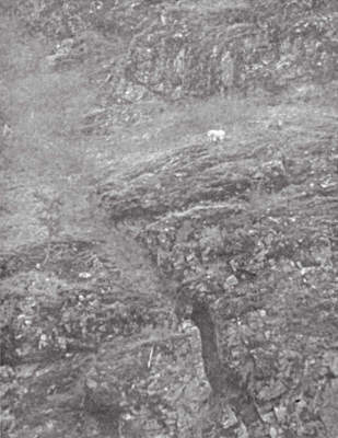 Rocky Mountain goat on a cliff - River of No Return