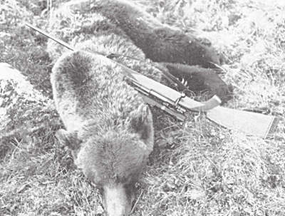 Successful outcome of grizzly bear hunting