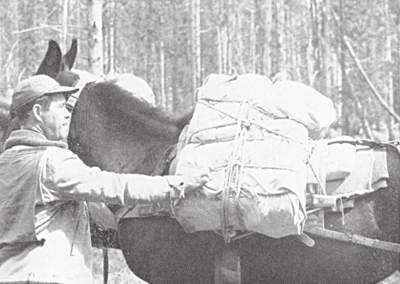 loaded pack saddle on a mule