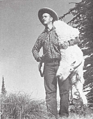 rocky mountain goat trophy head and pelt