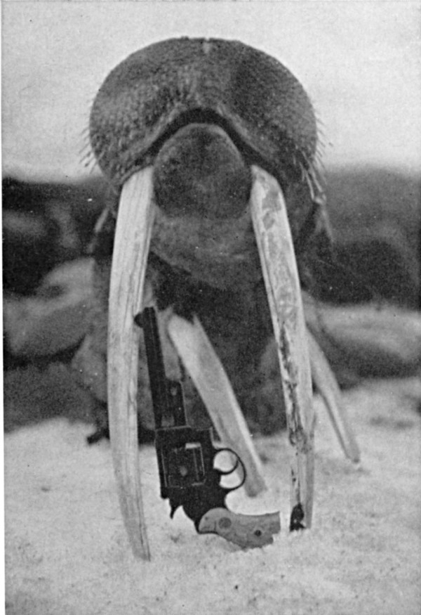 S&W .357 Magnum with Walrus