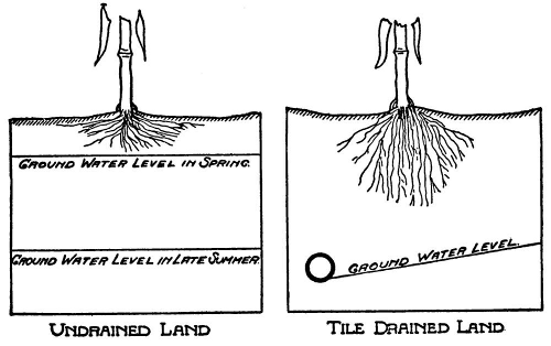 effects of drainage on root development